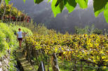 Full-Day Madeira Wine Tasting Tour with Lunch
