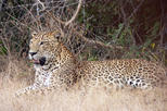 Private Guided Wilpattu National Park Safari from Dambulla