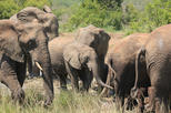 Africa & Mid East - South Africa: Hluhluwe-Imfolozi Game Reserve Guided Day Tour from Durban