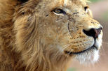 Lion Park Safari Guided Day Trip from Durban