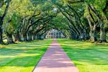 Private Chauffeured River Road Plantation Tour