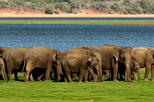 All Inclusive Minneriya Elephant Safari wth Sigiriya Lion Rock from Colombo