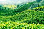 3-Day Munnar Private Tour from Madurai