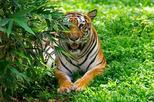 Day Trip to Bannerghatta Biological Park from Bengaluru