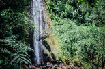 Oahu Waterfall and Rainforest Hike