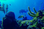 SCUBA Diving Tour at Roatan's North Shore
