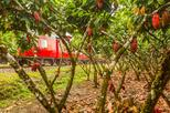 Private day tour - The Cacao Train from Guayaquil