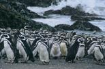 Chiloé Island Tour: Penguins of Puñihuil- Castro and Ancud