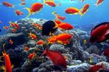 Day Tour to Sharm El Naga Beach for Snorkeling from Hurghada