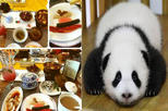 Private Day Tour: Panda Breeding & Research Base and Cooking Lesson at Sichuan Cuisine Museum