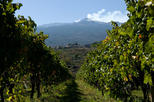 Etna and Wine Tour from Catania