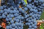 Full-Day Small-Group Medoc Wine Tour from Bordeaux