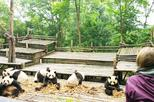 Chengdu Highlights Small-Group Day Tour of the Panda Research Base and the Leshan Giant Buddha