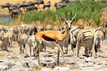 5-Day Family Friendly Tour of Etosha from Windhoek
