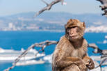 Shore Excursion: Rock of Gibraltar Tour