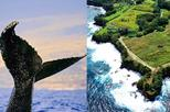 Whale Watch and Hamakua Coast Sight Seeing Tour
