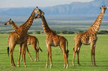 5-Day Lake Manyara Serengeti and Ngorongo Crater Camping Safari from Arusha