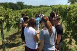 Weston Wine Tour