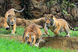 Private tour to cali zoo including admission ticket in cali 265765