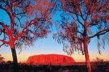 2-Day Uluru (Ayers Rock), Camel Farm and Kata Tjuta Trip from Alice Springs, Alice Springs, ...