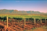 Hunter Valley Wine Tasting Day Tour from Sydney, Sydney, Wine Tasting & Winery Tours