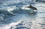 Jervis Bay Dolphin Cruise and Southern Coast and Highlands Day Tour from Sydney