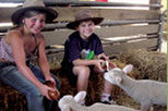 Warrook Cattle and Sheep Farm, Koalas and Penguin Parade Day Tour from Melbourne, Melbourne,...