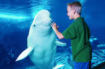 1-Day Admission to SeaWorld Orlando with Transport from Miami