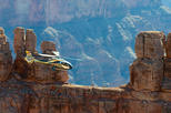 Grand Canyon Helicopter Tour with Lunch