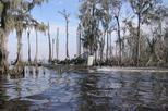 Small-Group Bayou Airboat Ride with Transport from New Orleans, New Orleans, Nature & Wildlife
