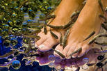 25-Minutes Natural Pedicure with Exotic Fish
