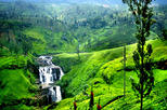 Nuwara Eliya Tour from  Bentota