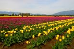 5-Night Luxury Package Tour of Kashmir from Srinagar