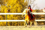 Bucharest Horse Riding Experience