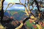Kauai Waimea Canyon Experience, Kauai, Full-day Tours