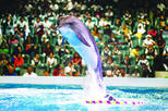 2-Day Afternoon Desert Safari, Dubai Dolphinarium and Half-Day City Tour From Dubai