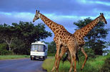 Aquila Game Reserve Wildlife Safari from Cape Town, Cape Town, Safaris