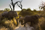 Big Five Afternoon Game Drive in Kruger National Park