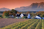Whether you're a wine connoisseur or a lover of natural beauty you'll be swept away on this wine tour to the famous Stellenbosch and Paarl Valley wineries.