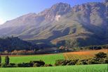 Spend a few hours in the beautiful wine growing region of Stellenbosch, home to many of South Africa's premier wine-makers.