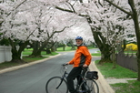 Viator Exclusive: Cherry Blossom Bike Tour in Washington DC