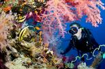 FULL DAY SCUBA DIVING IN HURGHADA