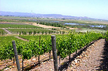Customizable Wine Country Tour from San Francisco, Napa & Sonoma,