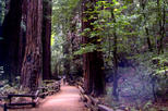 San Francisco Super Saver: Muir Woods and Wine Country Tour by Viator