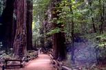San Francisco Supersaver: Muir Woods and Wine Country Tour, Napa & Sonoma,