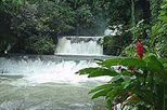 Black River Safari, Negril, Day Trips