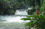 Black River Safari, YS Falls and Appleton Rum Estate Tour from Negril, Negril,