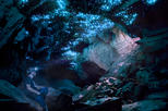 Glowworm Caving Adventure Tour in Waitomo