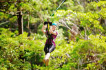 Gold Coast Mt. Tamborine Canyon Flyer Guided Zipline Tour