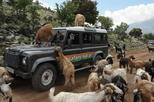 Full-Day Land Rover Safari from Heraklion with Lunch